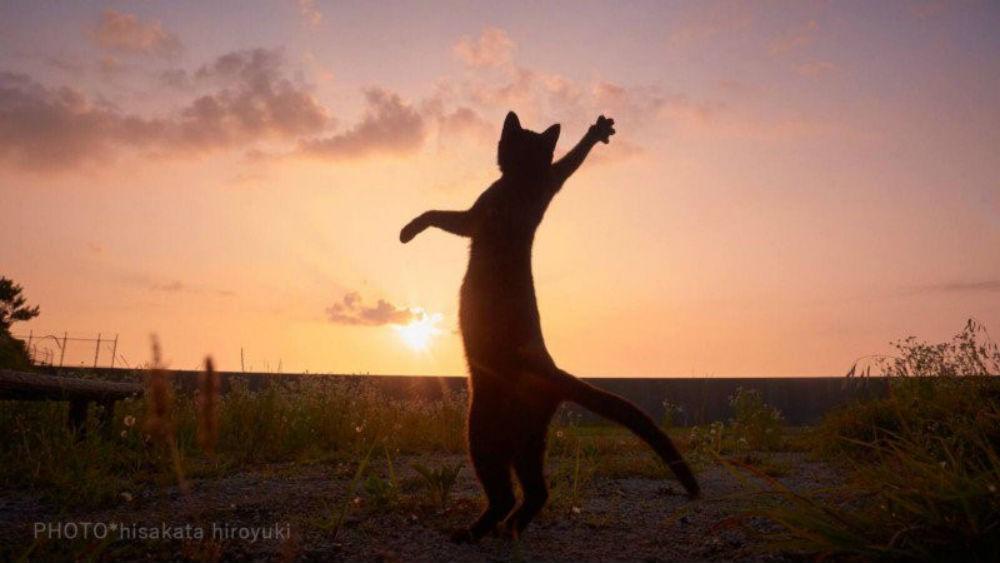 Te zdjęcia udowadniają, że koty ninja istnieją!
