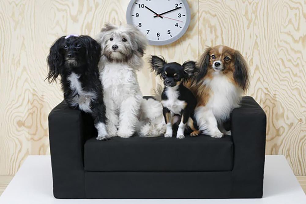 IKEA prezentuje kolekcję mebli dla zwierząt!
