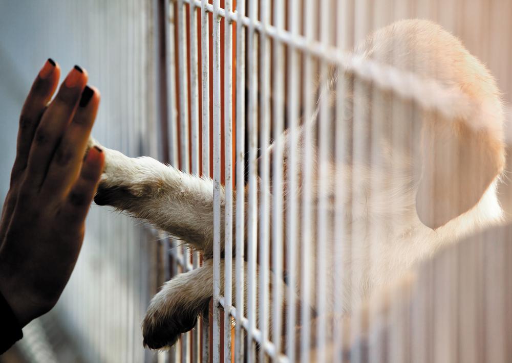 7 powodów, dla których lepiej jest adoptować zwierzaka!