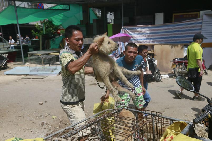 Festiwal psiego mięsa w Yulin - fakty i petycja