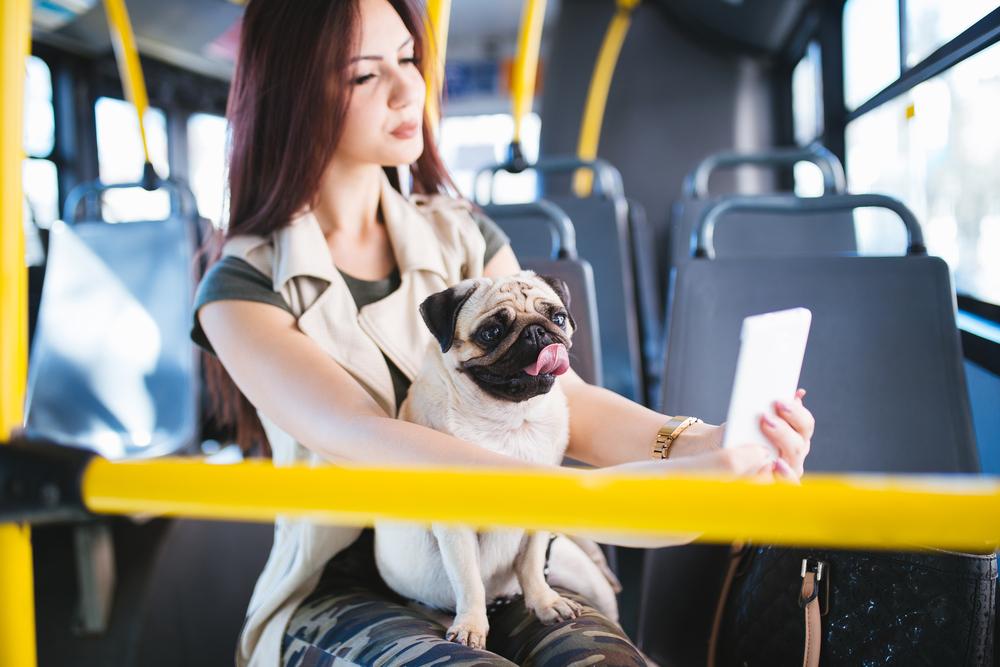 7 wskazówek jak zrobić idealne zdjęcie swojemu psu!