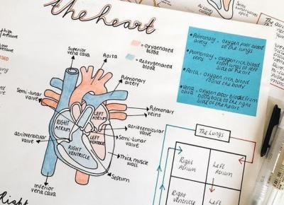 Nauka do sesji z anatomi
