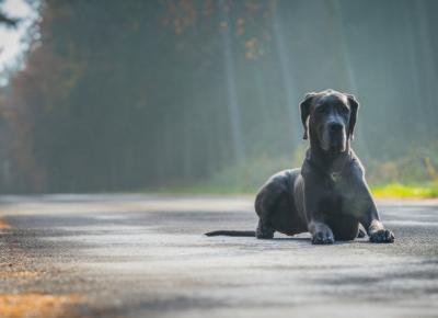 Największe bzdury na temat psów !
