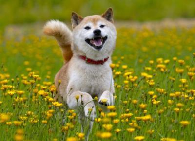 Komendy które powinien znać każdy pies !