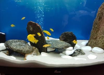 Oko w oko z adopcją - czy jesteś gotowy mieć rybki? ⋆ Kajgam
