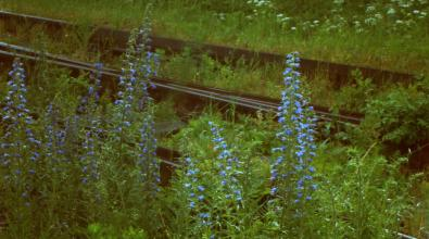 Inspiracje panny en.: #19 Kwiaty na peronach
