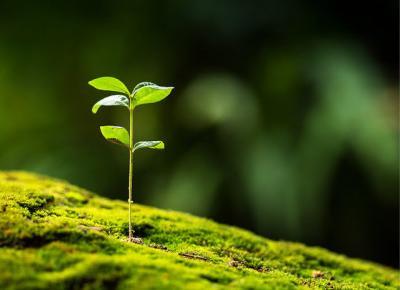Zadbaj o planetę! Bądź eko! - Na Wysokim Obcasie