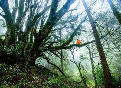 Walcz lub zgiń — recenzja Amazonii