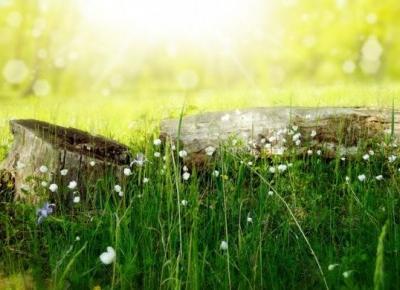 Promień słońca – Szmaragdowe pióro