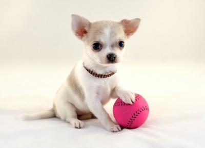 Najdroższe na świecie rasy psów!