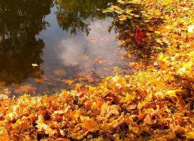 Oczko wodne przed zimą | oczyszczanie, filtr, lampa UV, ryby, rośliny