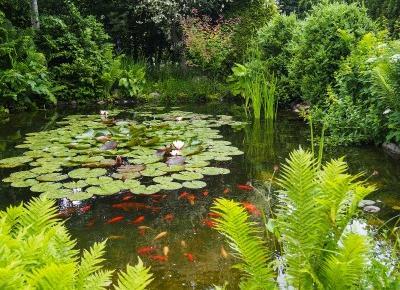 Oczko wodne na wiosnę | klarowność wody i walka z glonami