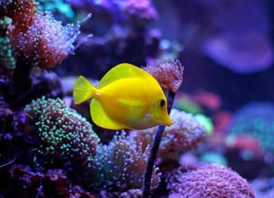 Oświetlenie akwarium morskiego: wybór | jaki typ oświetlenia