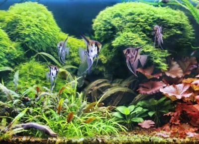 Akwarium roślinne: oświetlenie | świetlówki T5, T8 i lampy LED