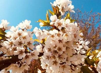 Weekly blog post – English Spring