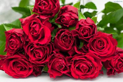 Kocie Róże