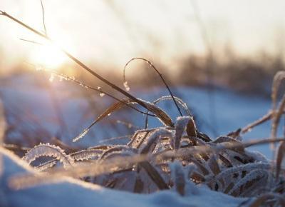 Zimowe pstryki.