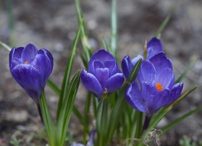 Wiosna w moim ogrodzie - GALERIA -  Ada Zet