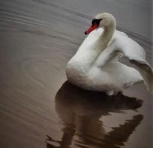 Nie każdy dostrzega piękno.: Marzyć czy nie marzyć? - oto jest pytanie!