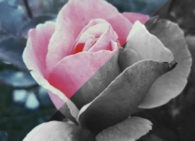 Nie każdy dostrzega piękno.: Pani Róża