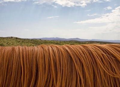 Jak wybrać idealny szampon do swoich włosów?
