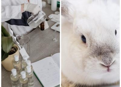 Koniec z testowaniem kosmetyków na zwierzętach w Chinach? | Flaming Blog