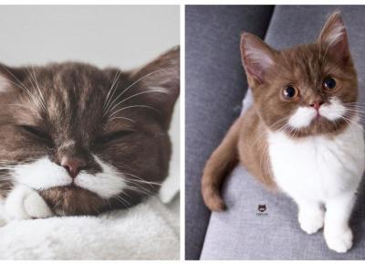 Najsłodszy kociak na Instagramie! Nie będziecie mogli oderwać od niego oczu