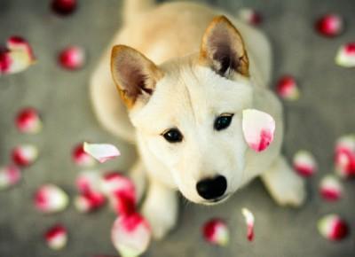 Pies największy przyjaciel człowieka!❤