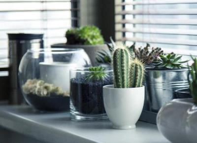Jakie rośliny warto mieć w sypialni? | DlaNastolatek.pl