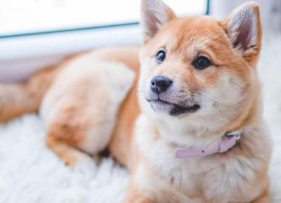 10 zasad dla właścicieli psów | DlaNastolatek.pl