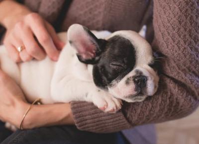 Dlaczego warto mieć psa? | DlaNastolatek.pl