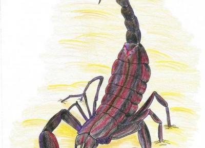 Trochę o Znakach Zodiaku – Skorpion – Cień Pisarza