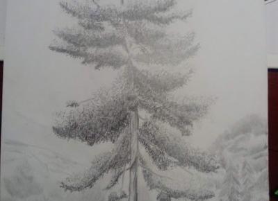 Cień Pisarza: Drzewa - Z kursu rysunku