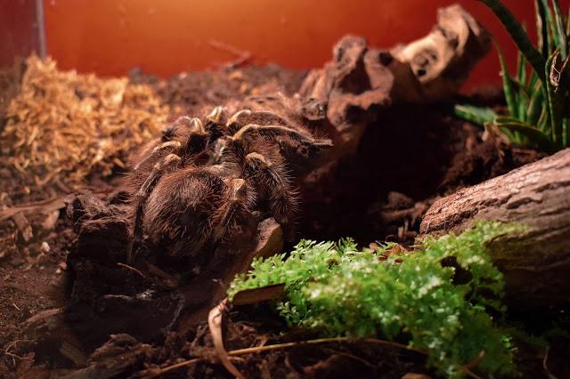 Dollka Blog: Fascynujący świat pająków i skorpionów