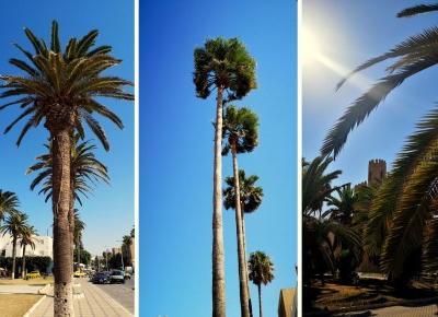 Widziałam flamingi, błękitne miasteczko i jechałam autobusem miejskim przez kawałek Tunezji