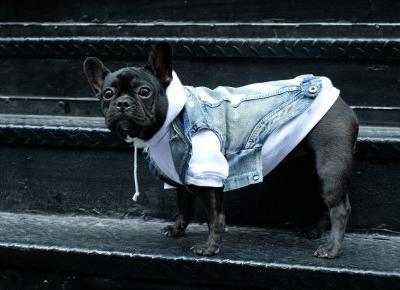 Pawkier wypuszcza streetwearowe ubrania dla psów