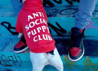 Pawkier - Teraz Twój pies też może polubić streetwear!