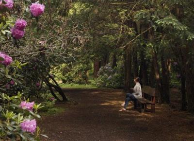 Na weekend: Lasy i parki Opolszczyzny, które warto odwiedzić