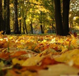 ▪ Mów mi Kate ▪ blog modowy i lifestylowy: Jesień w obiektywie