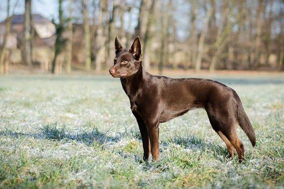 TOP 5 ras psów