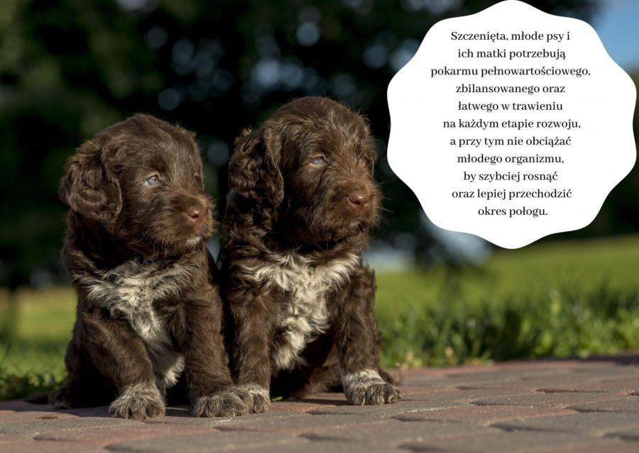 TEST: sucha karma Divinus Puppy