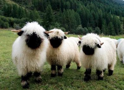 TOP czterech zwierząt (które chciałabym posiadać)
