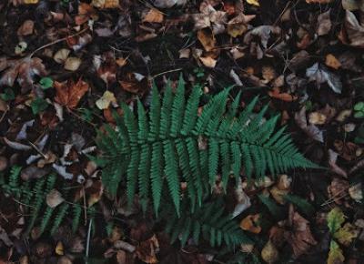 Leśna zapchajdziura