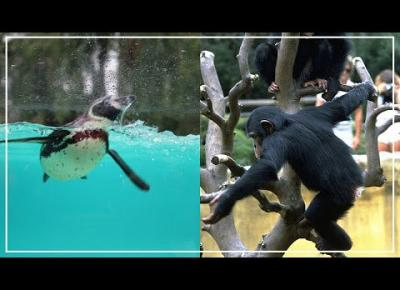 Daily vlog Wrocław Zoo oceanarium i Afrykarium mini vlog | GlamOnline