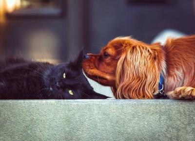 5 powodów dla których warto mieć psa lub kota