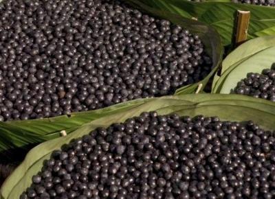 Sok z Acai - super owoc z Ameryki południowej