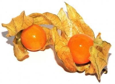 Physalis i Mangostan - nowe owoce w ofercie Tesco