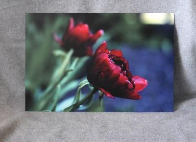 Świat obiektywem Janettt: FOTOOBRAZ - SAAL DIGITAL ZACHWYCA JAKOŚCIĄ PRODUKTÓW