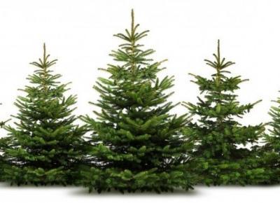 """Żywa choinka na święta w domu. Chwila nieuwagi i twoje drzewko może być naprawdę """"żywe"""""""