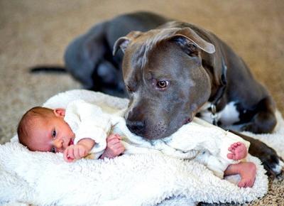 Mąż nie chce, aby pit bull jego żony przebywał z ich dzieckiem — wtedy stało się to